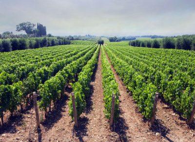 vinograd280715tw6301615047370